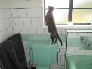 Mandrel Checking Out the Bathroom!