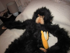 Even Monkeys Get Tired After a Long Day